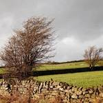 trees in the Yorkshire Dales
