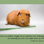 guinea pig with quote - Life is an endless struggle full of frustrations and challenges, but eventually you find a hair stylist whom you like.