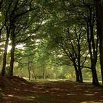Glade In Yorkshire