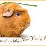 New Year Guinea Pig