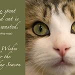 cat with quote by Colette about time with a cat never being wasted