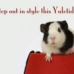 Yuletide Guinea Pig on a fez