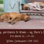 Perchance To Dream WILLIAM SHAKESPEARE: To sleep, perchance to dream - ay, there's the rub.