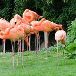 photo of flamingos standing against greenery