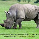 photo of a white rhino with a statement promoting Endangered Species Day and the Endangered Species Coalition