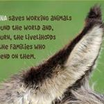 photo of a donkey with a quote supporting the work of SPANA helping working animals