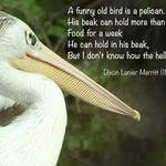 pelican with quote by Dixon Lanier Merritt - A funny old bird is a pelican. His beak can hold more than his bellican. Food for a week He can hold in his beak, But I don't know how the hellican.