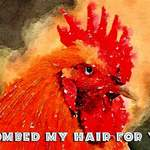 cockerel with text that reads 'I combed my hair for you.'