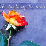 rose with text 'Oh darling, be mine'