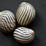 photo of two small striped seashells