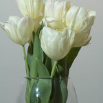 a photo of white tulips in a vase