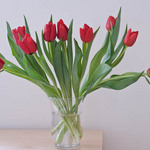 photo impression of red tulips in a vase