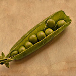 photo of an open pea pod with peas