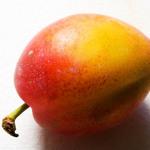 photo of a plum fruit
