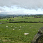 trees and fields in the Yorkshire Dales with sheep in the fields