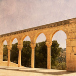 photo of trees on the Temple Mount in Jerusalem viewed through four arches