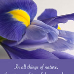 photo of an iris with a quote by Aristotle about nature's marvels