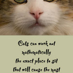 a close-up photo of a cat's face and a quote by Pam Brown about a cat knowing just where to sit