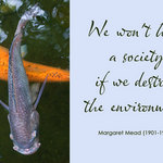 photo of Koi carp and a quote by Margaret Mead that we won't have a society if we destroy the environment