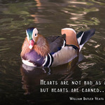 Hearts Are Earned  - WILLIAM BUTLER YEATS: Hearts are not had as a gift, but hearts are earned...