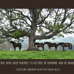 horses under a tree with a a quote about friendship by Caroline Sheridan Norton