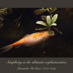Coi carp and quote from Leonardo Da Vinci - Simplicity is the ultimate sophistication.