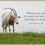 Scimitar-horned Oryx with quote by Paul Rodriguez: Hunting is not a sport. In a sport, both sides should  know they're in the game.